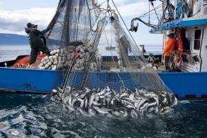 alaska salmon haul